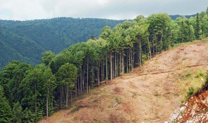 Buenas intenciones de deforestaciones